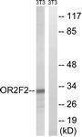 GTX87845 - Olfactory receptor 2F2
