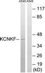 GTX87879 - KCNK15