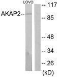 GTX87891 - AKAP2