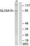GTX87925 - SLC6A15 / NTT73
