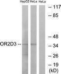 GTX87988 - Olfactory receptor 2D3