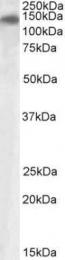 GTX88257 - PLA2R1 / PLA2R