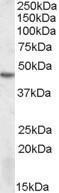 GTX88405 - STK17B / DRAK2
