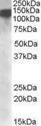 GTX88436 - DHX9