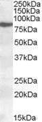 GTX88501 - ALOX15 / LOG15
