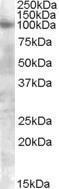 GTX88618 - CD332 / FGFR-2