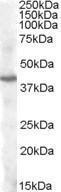 GTX88644 - PITX3 / PTX3