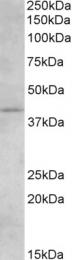 GTX89424 - Cannabinoid receptor 2