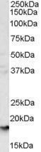 GTX89457 - CD235a / GYPA