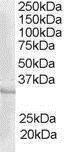 GTX89673 - CREM