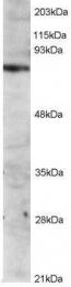 GTX89987 - Tyrosine-protein kinase ITK/TSK