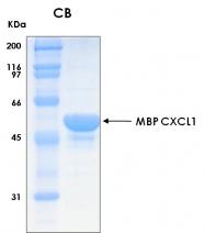 PRO-50006-0050 - CXCL1 / GRO-alpha