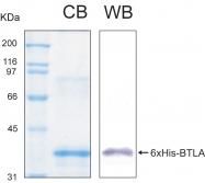 PRO-50024-0050 - CD272 / BTLA