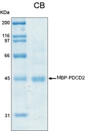 PRO-50025-0025 - PDCD2