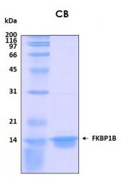 PRO-50048-0025 - FKBP1B / FKBP9
