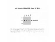 IQ549 - Histone H3.1