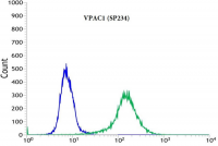 Flow Cytometric analysis of Rabbit anti-VPAC1 Antibody Cat.-No AM33238PU (Clone SP234) in A431 (green) compare to negative control of rabbit IgG (blue)